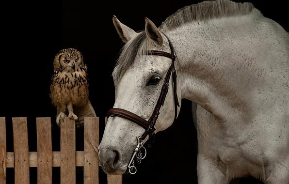 Picture face, horse, owl, bird, horse