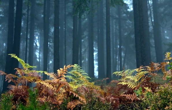 Picture forest, trees, landscape, nature, fern