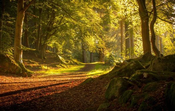 Picture road, autumn, forest, trees, Scotland, Scotland, Tyrebagger Forest, Aberdeen, Aberdeen