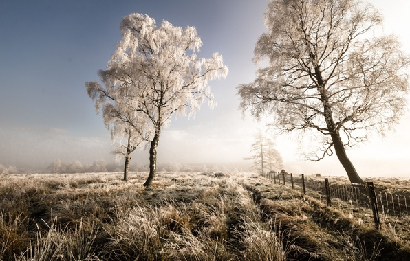 Picture frost, field, autumn, trees, landscape, nature, the fence, morning