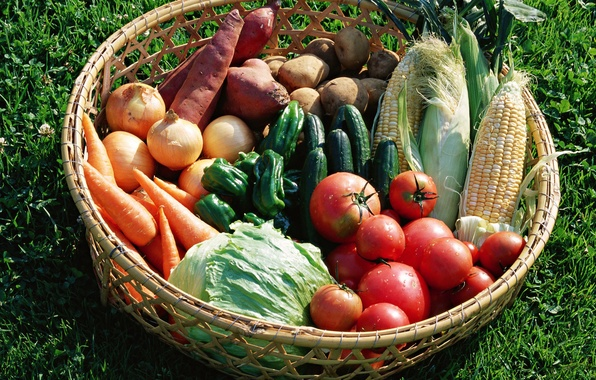 Picture BASKET, PEPPER, TOMATOES, CUCUMBERS, BOW, CARROTS, CABBAGE, CORN, POTATOES, VEGETABLES