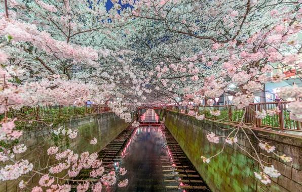 Picture nature, spring, Japan, Sakura, Tokyo, channel