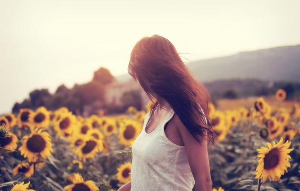 Picture field, sunflowers, pose, Girl
