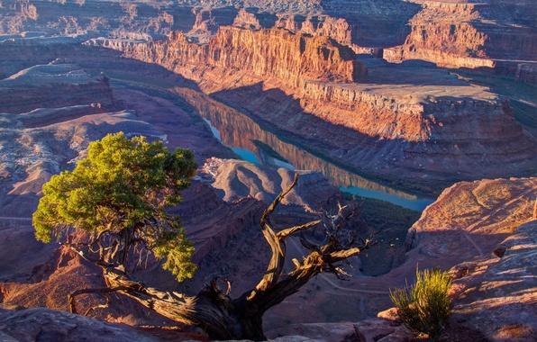 Picture light, river, tree, Mountains, canyon, USA, Utah, solar