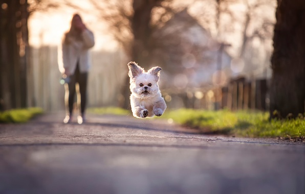 Picture jump, running, dog