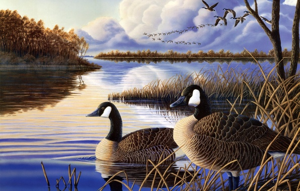 Picture autumn, lake, river, duck, the evening, painting, geese, a flock of ducks, Evening Rest, backwater, …