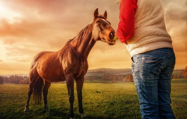 Picture girl, landscape, horse, treatment
