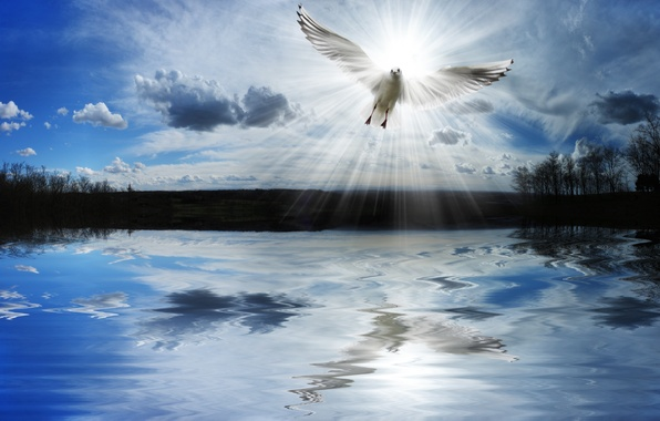 Picture freedom, lake, dove, pond