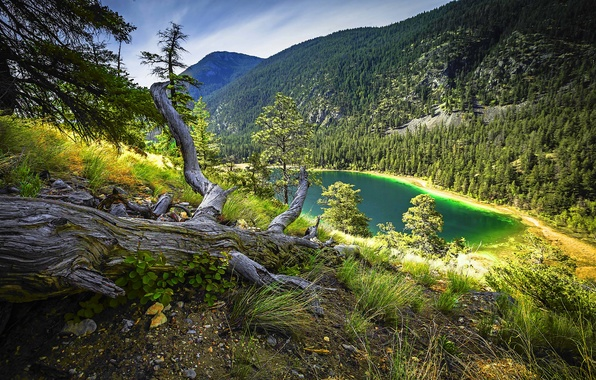 Photo wallpaper forest, trees, mountain, turquoise lake, dry grass