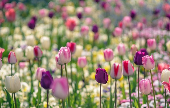 Picture Park, paint, spring, petals, garden, meadow, tulips