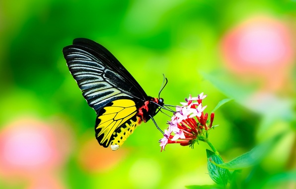 Picture flower, leaves, butterfly, Macro, wings
