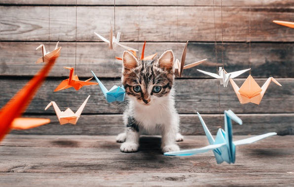 Picture cat, mustache, the game, paws, blur, fluffy, tail, colorful, colorful, different, origami, hunter, cat, Tomcat, …
