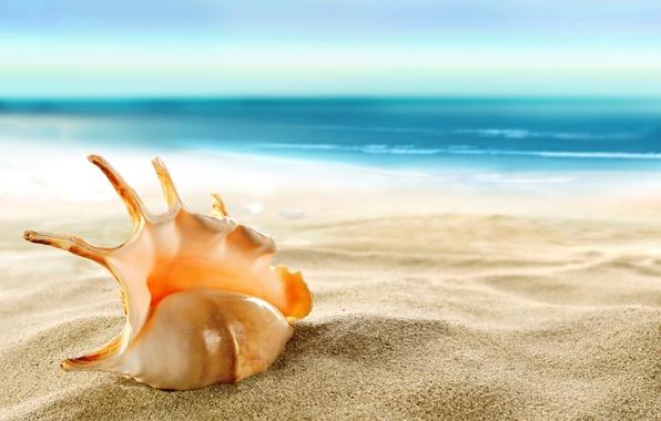Picture sand, sea, beach, shell, beach, sea, sand, shore, seashell
