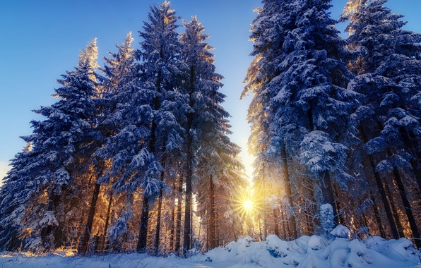 Picture winter, forest, rays, light, snow, trees, nature, tree, the sun