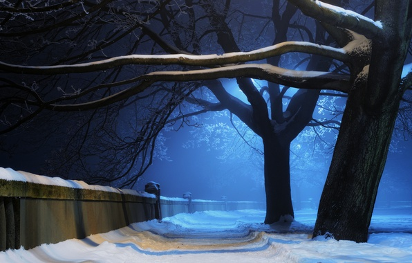 Picture winter, light, snow, trees, night, nature, Park, wall, alayka