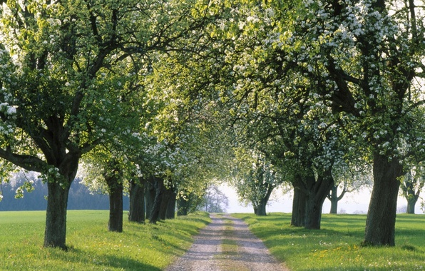 Picture road, trees, nature, the way, the way, tree, road, spring, alley, alley