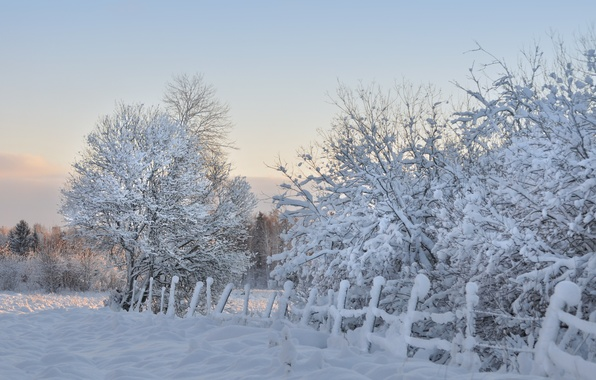 Picture winter, snow, trees, the fence, morning, frost