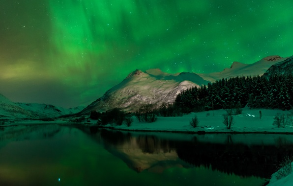 Picture winter, forest, the sky, stars, snow, trees, mountains, night, lake, Northern lights, Norway, Svolvaer