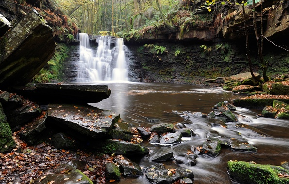 Picture autumn, forest, leaves, trees, river, stream, stones, waterfall, stream