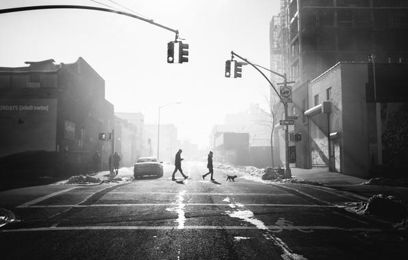 Picture people, sunlight, cityscape, traffic light, crosswalk, crossing