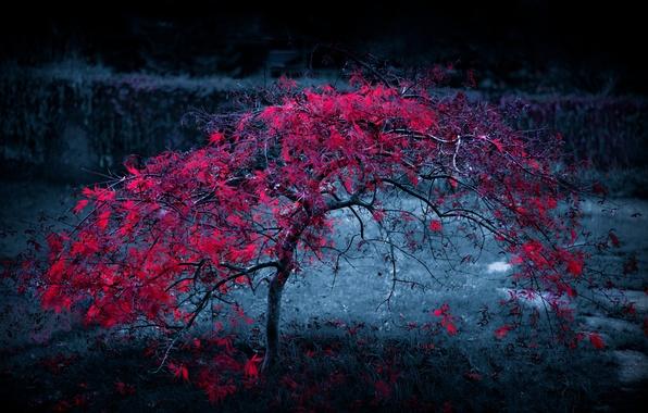 Picture autumn, leaves, light, fog, tree, the crimson
