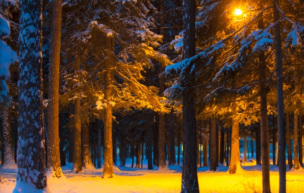 Picture winter, light, snow, trees, night, Park, lantern