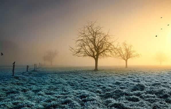 Picture frost, grass, the sun, trees, birds