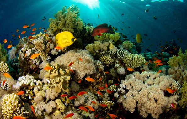 Picture light, fish, nature, corals, reef
