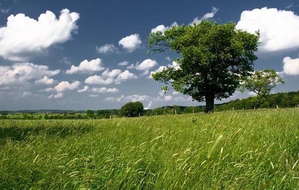Picture greens, field, the sky, tree