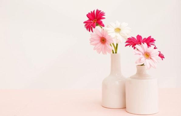 Picture background, bouquet, light, vase, Gerbera