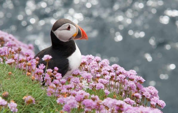 Picture flowers, glare, bird, profile, puffin, Atlantic, Stalled