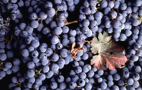 Picture sheet, berries, texture, grapes
