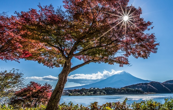 Picture autumn, lake, tree, mountain, Japan, Fuji