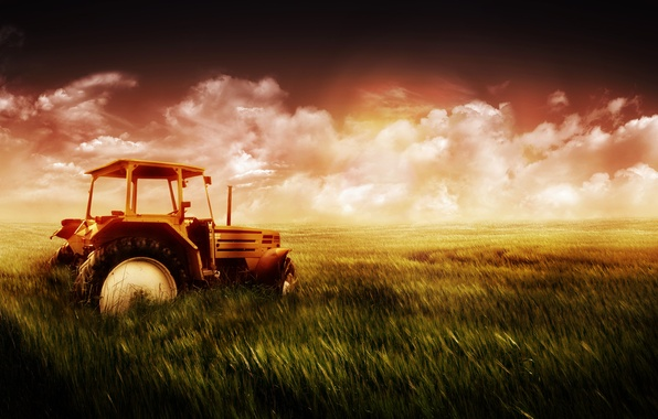 Picture wheat, field, the sky, grass, tractor