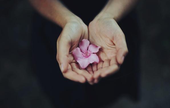 Picture flower, hands, petals