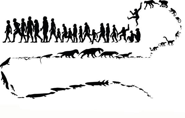 Picture animals, people, monkey, evolution