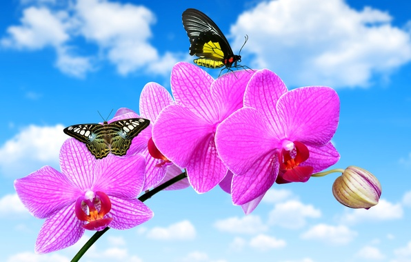 Picture flower, the sky, clouds, butterfly, blue, Orchid, closeup