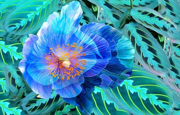 Picture flower, leaves, line, paint, Mac, petals