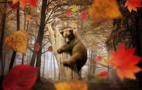 Picture autumn, forest, leaves, trees, owl, mushrooms, bear, falling leaves