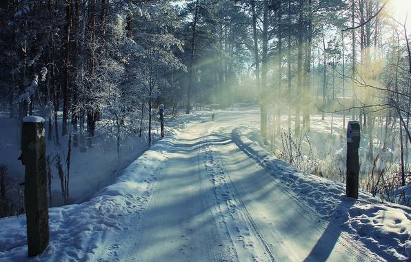 Picture winter, road, forest, snow, landscape, dog