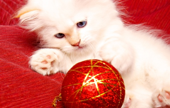 Picture kitty, toy, new year, cat