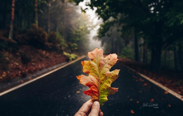 Picture road, autumn, forest, macro, sheet, hand
