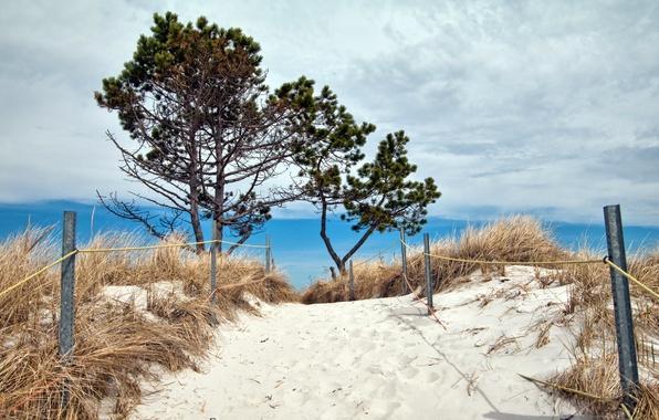 Picture sea, beach, summer, landscape, dunes