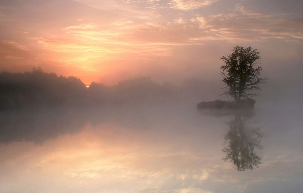 Picture fog, lake, reflection, tree, morning