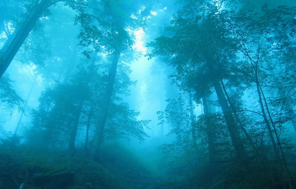 Photo wallpaper forest, trees, blue, fog