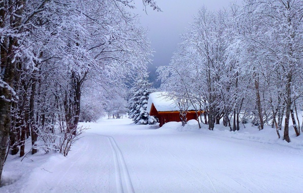 Picture winter, road, forest, the sky, snow, landscape, nature, house, house, white, forest, road, sky, landscape, …
