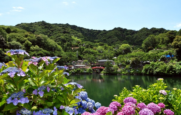 Picture flowers, the city, lake, hydrangea