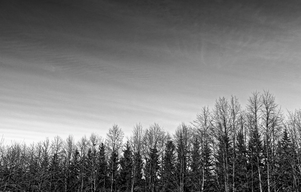 Picture forest, the sky, Gothic, black and white, alley
