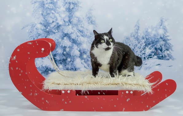 Picture winter, cat, eyes, cat, look, face, snow, red, background, black and white, new year, Christmas, ...