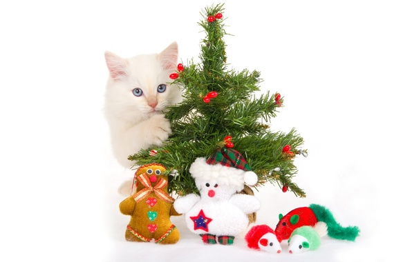 Picture kitty, toys, tree, white background, Souvenirs